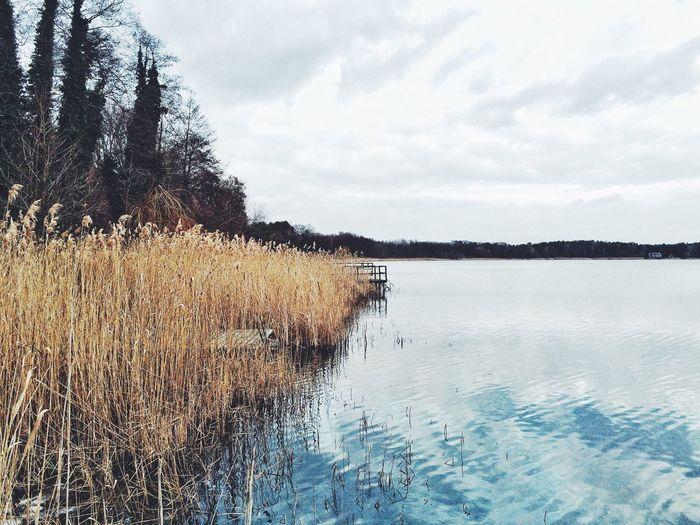 Lake View Lake Brandenburg Germany
