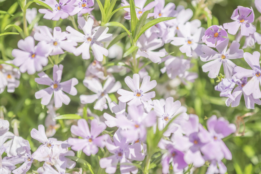 flowers in close-up shooting Beauty In Nature Blumen Close Up Close-up Fleur Fleurs Flower Flowers Flowers, Nature And Beauty Flowers,Plants & Garden Fragility Freshness Growth Macro Macro Photography Macro_collection Makro Makro Photography Nature Pattern Plant Plant Plants Plants And Flowers Nature's Diversities