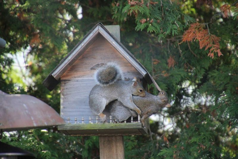 Playing? Animal Wildlife Outdoors Nature Wood - Material Animal Themes squirrels No People