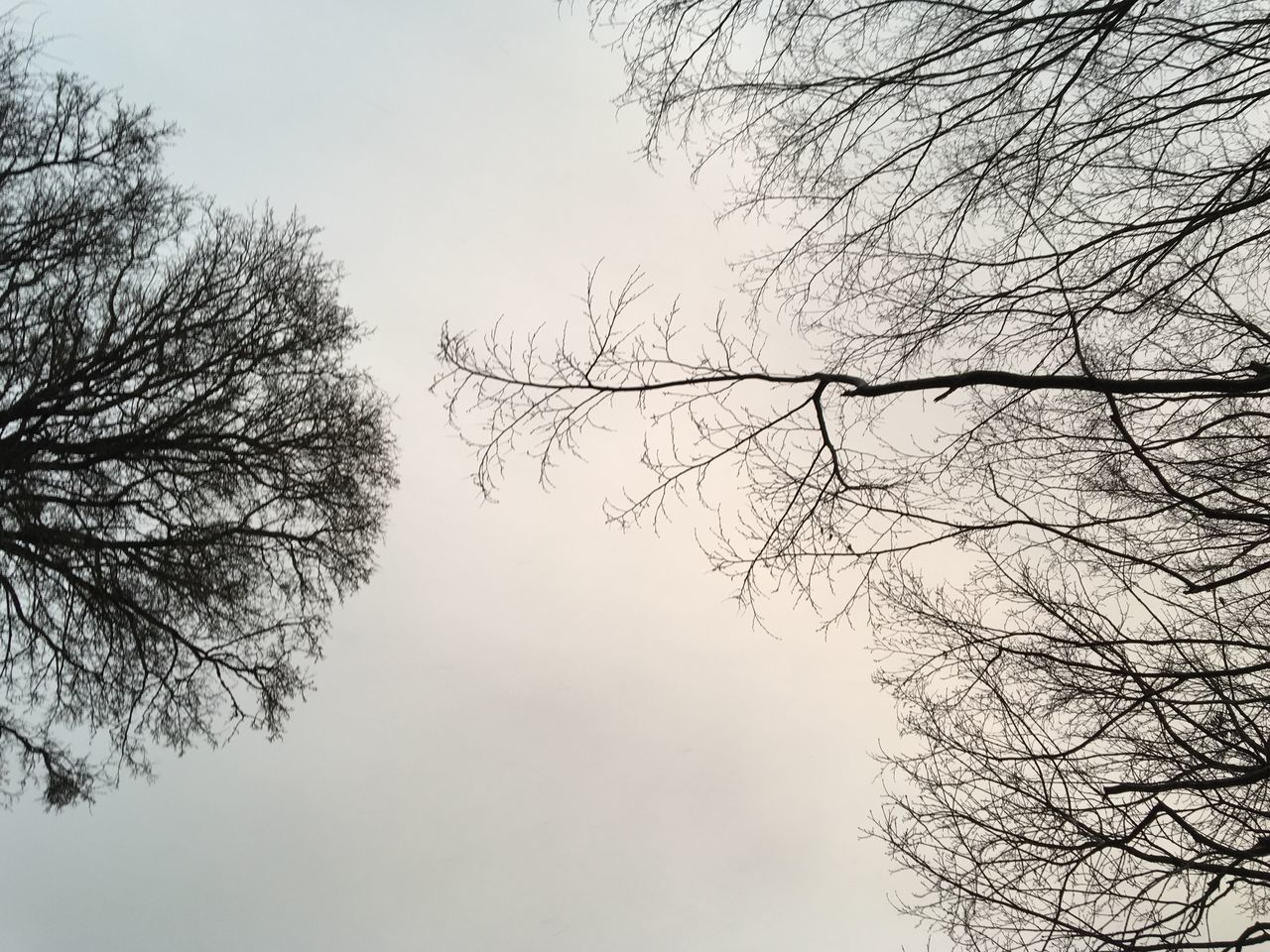bare tree, tree, branch, nature, beauty in nature, low angle view, sky, no people, outdoors, tranquility, day, clear sky, scenics