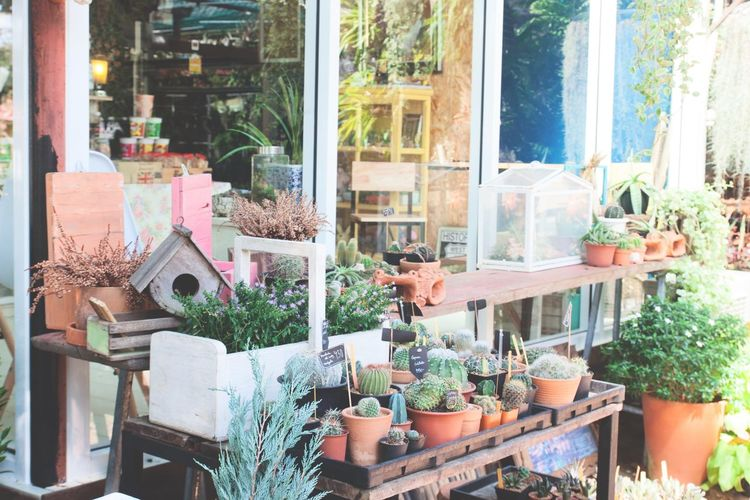 Home and garden decoration Architecture Building Exterior Cafe Coffee Shop Collection Day Freshness Garden Gardening Green Green Color Home Nature Nature No People Outdoors Plant Pot Plant Window