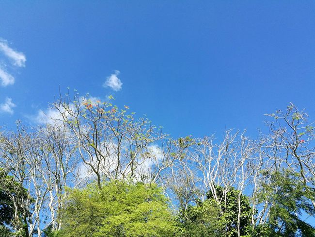 Blue Nature Sky Sunlight Plant Beauty In Nature Growth No People Outdoors Freshness Bluesky