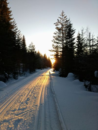 beautiful cold Norwegian Nature Norwegian Winter Cross Country Skiing Sunrise Tree Road Pinaceae Pine Tree Winter No People Landscape Snow Outdoors Forest Cold Temperature Nature Scenics