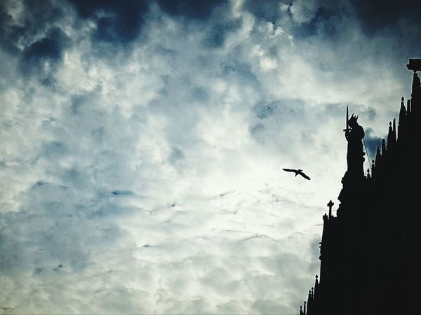 Skulpture on the top Flying In The Sky Fliying Birds Bird Sky And Clouds Sky Mystery Mystic Mystical Atmosphere Atmospheric Sky Atmosphere Original Experiences Capture The Moment Birds Markusplatz Piazza San Marco Skyscape The Changing City Quiet Moments Hello World Venice, Italy The Magic Mission