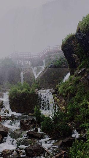 Niagara Falls Niagara Falls NY Niagrafalls Water Plants