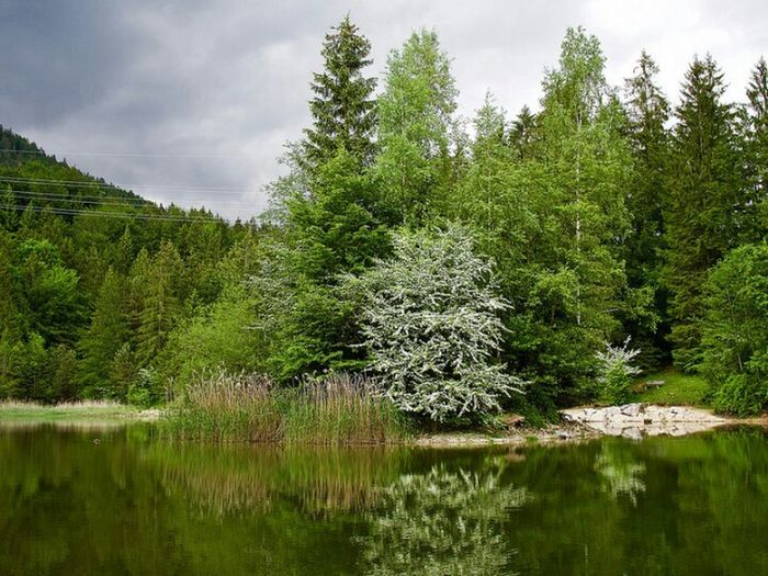 Lake Reflection Schmölzersee