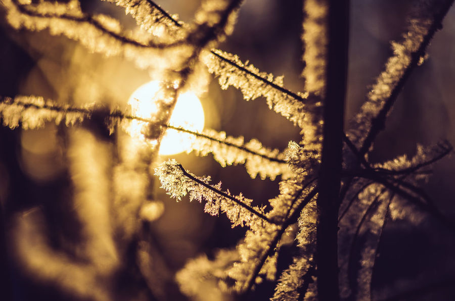Fragility... Ice Crystals Beauty In Nature Winter Bokeh Photography Bokehlicious Backlit Ice Close-up Sunlight Branch Klaquax@home Cold Temperature EyeEm Nature Lover Morning Light Eye4photography  Frosty Morning Golden Light Shallow Depth Of Field