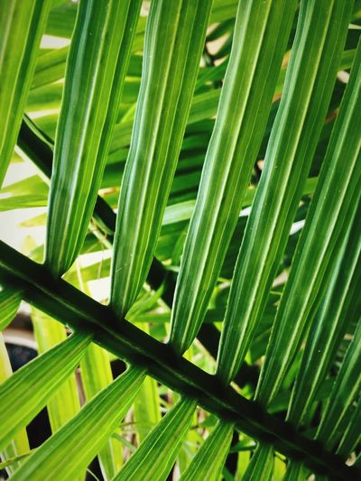 Palm leaf Garden Nature Textures Simplicity Play Of Light Natural Simplicity Pattern, Texture, Shape And Form Woven Nature_collection Nature Plants Indoor Plants Light And Shadow