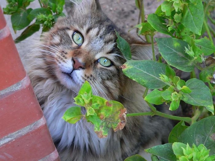 Portrait of cat on potted plant