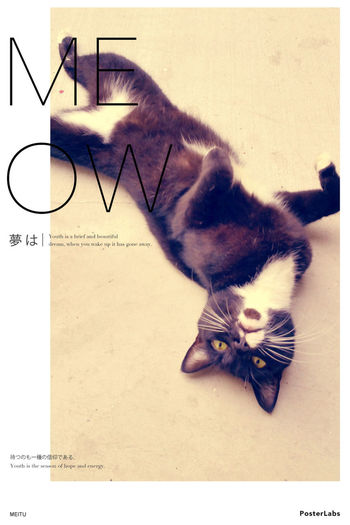Meow Meow Cat♡ Sunday Morning 16 Nov 14