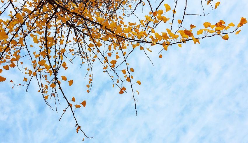 Low Angle View Branch Tree Beauty In Nature Sky Nature Growth Cloud - Sky No People Outdoors Autumn Leaf Freshness EyeEmNewHere