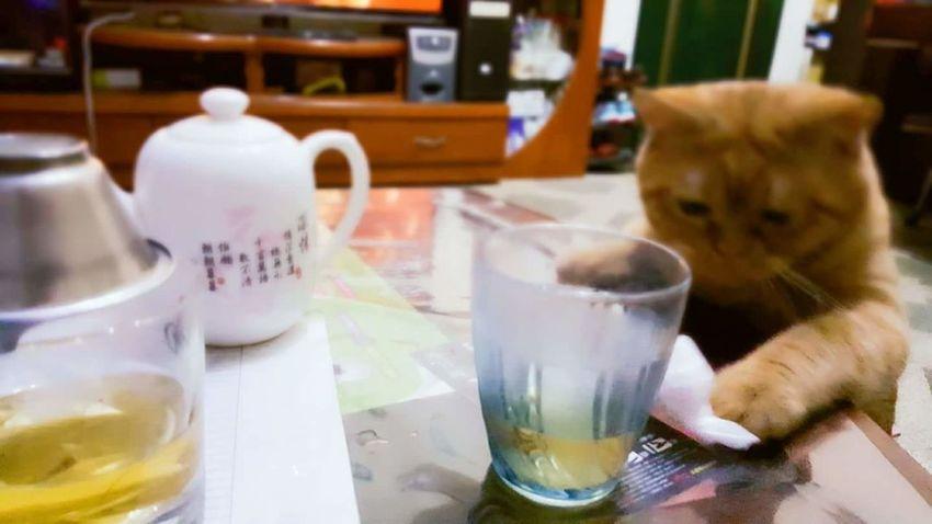 茶道 猫 喵星人 翻轉視界 Catboy Wish Focus Day
