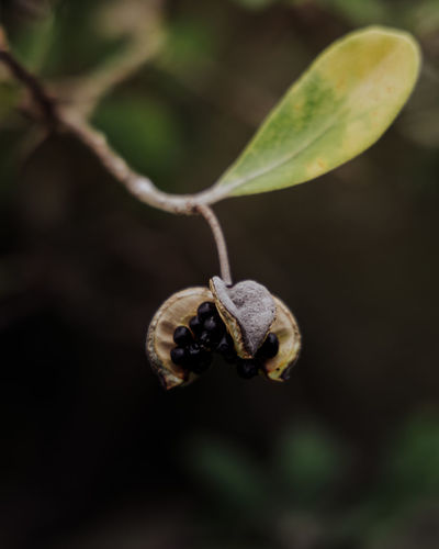 Close-up of seed pod on plant