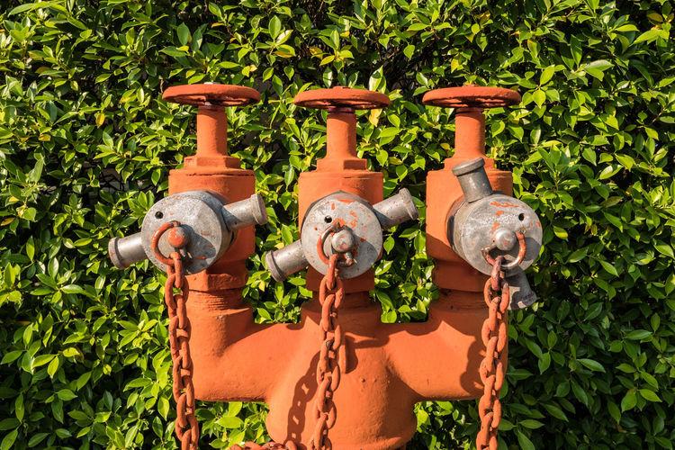 Close-up of orange metallic pipes against plant