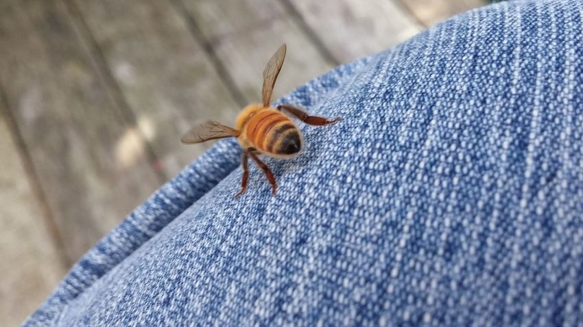 🐝Bee cool. 🐝Dont be an a$$hole Corner Shot Your Reality Is Not Mine My Knee Softness Fuzzy Buddy Cuteness Buzzy🐝 Hello World Have A Seat Cruising Around Cute Bee Nature Photography Outside Photography Insect Photography Insect Paparazzi Jeans Wings & Things HoneyBee Tauranga NZ New Zealand Wintertime 2016 Little Bee Bienen