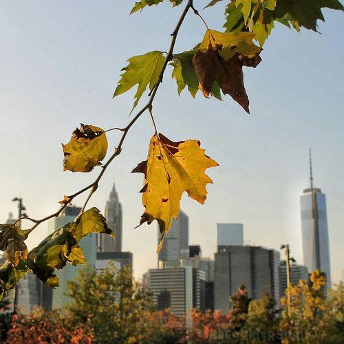 Leafy Brooklyn NYC Skyline Autumn
