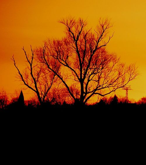 The sun is the king of torches Sunset Tree Bare Tree Silhouette Orange Color No People Nature Tranquil Scene tranquil scene Beauty In Nature Sky Outdoors Scenics Branch