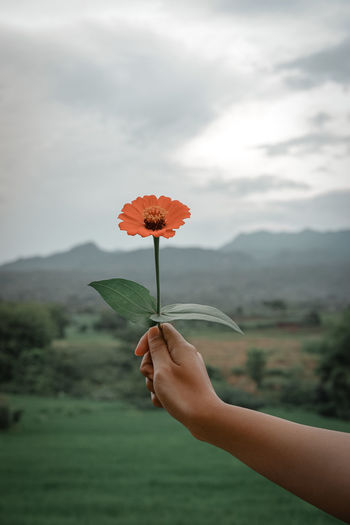 Person holding red flowering plant against cloudy sky