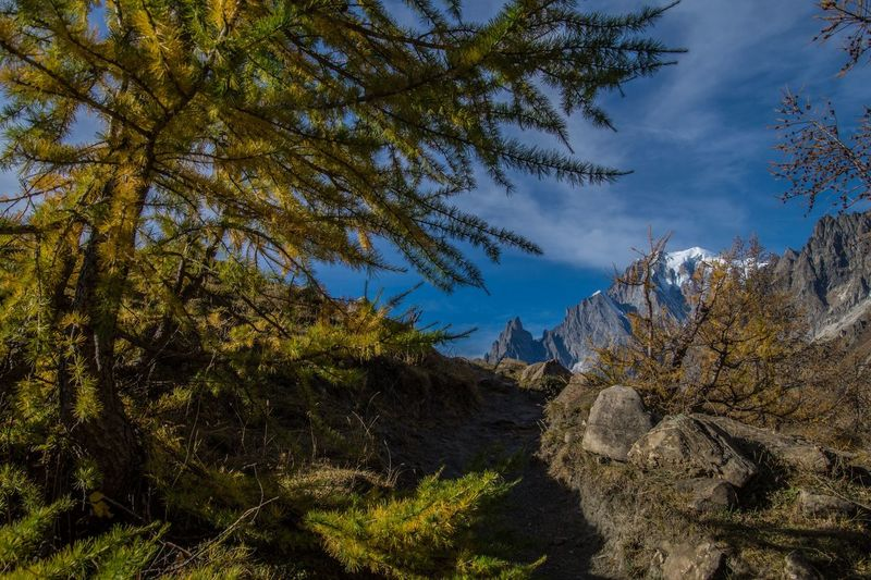 refuge bonatti,courmayeur,italy Outdoors Tree Plant Sky Mountain Beauty In Nature Cloud - Sky Nature Tranquility Scenics - Nature No People Landscape Tranquil Scene Day Environment Growth Land Non-urban Scene Autumn Branch