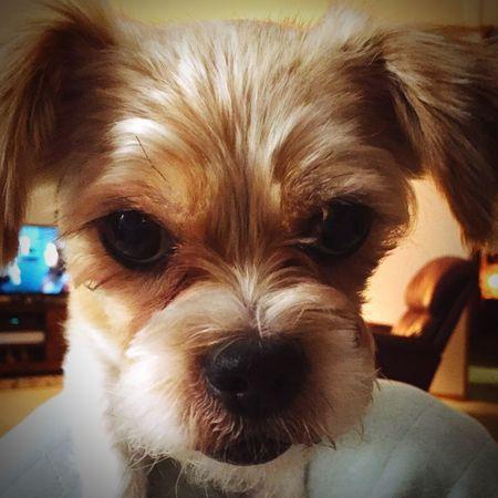 First Eyeem Photo Dogs Food? Yes Please! Beggingdog Closeup