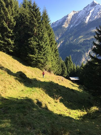 Lost In The Landscape Real People Leisure Activity One Person Mountain Tree Grass Sky Beauty In Nature Hikingadventures TyroleanAlps Zillertal Alps Shadow Sunlight Tranquility