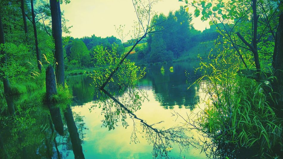 First Eyeem Photo Summer ☀ Green Nature Polish Beautiful Lg G4 Photography