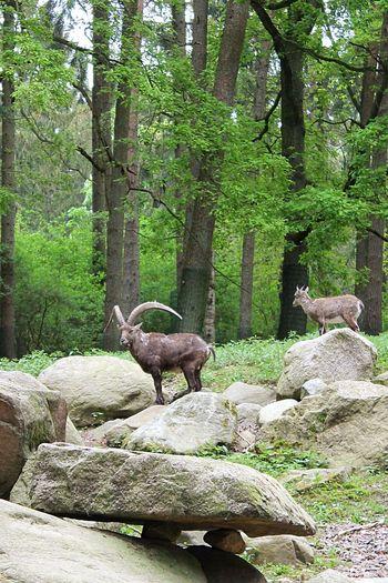 Animals Animal Photography Wildpark Schwarze Berge Wildlife Photography Beautiful Nature Nature Photography