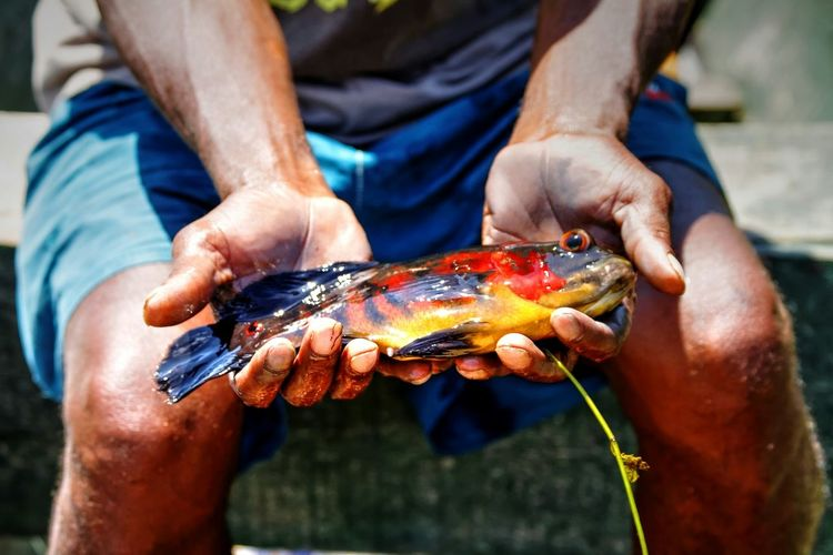 Hands of man holding colorful fish