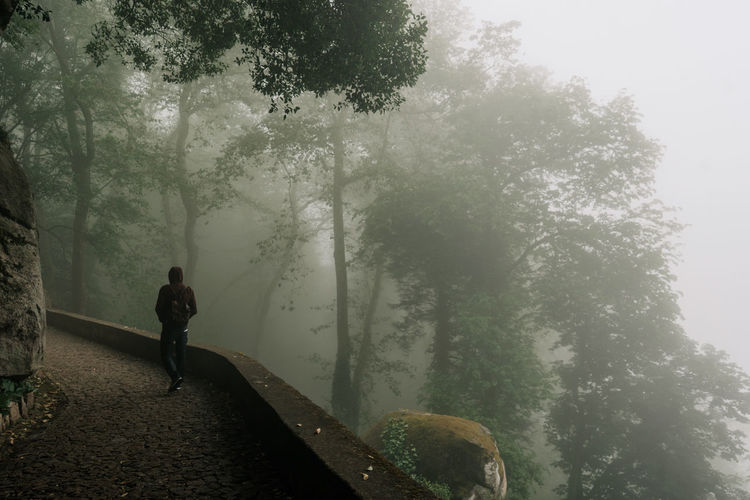 Day Outdoors Sintra (Portugal) Sintra, Portugal Tree Real People Plant Fog One Person Lifestyles Full Length Leisure Activity Nature Growth Rear View Forest Beauty In Nature Standing Walking