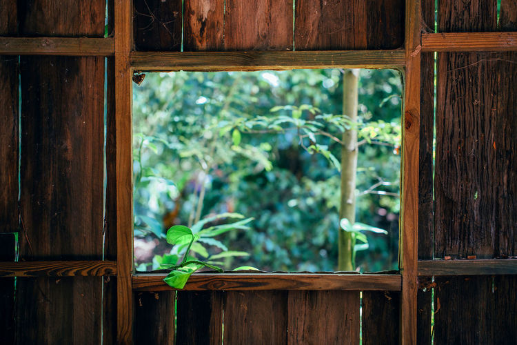 Close-up of plant on window