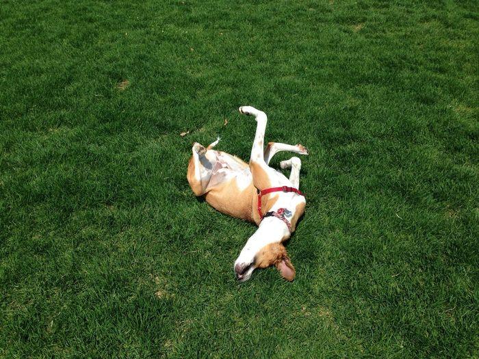 High angle view of a dog sleeping on grass