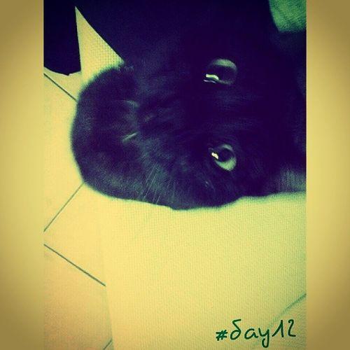 Lazzaro, Non mi fissare! 100happydays Day12 Cat Catoftheday cats pet animals feline picoftheday photooftheday igersoftheday igersAbruzzo igersItalia eyes lookat blackcat instamood