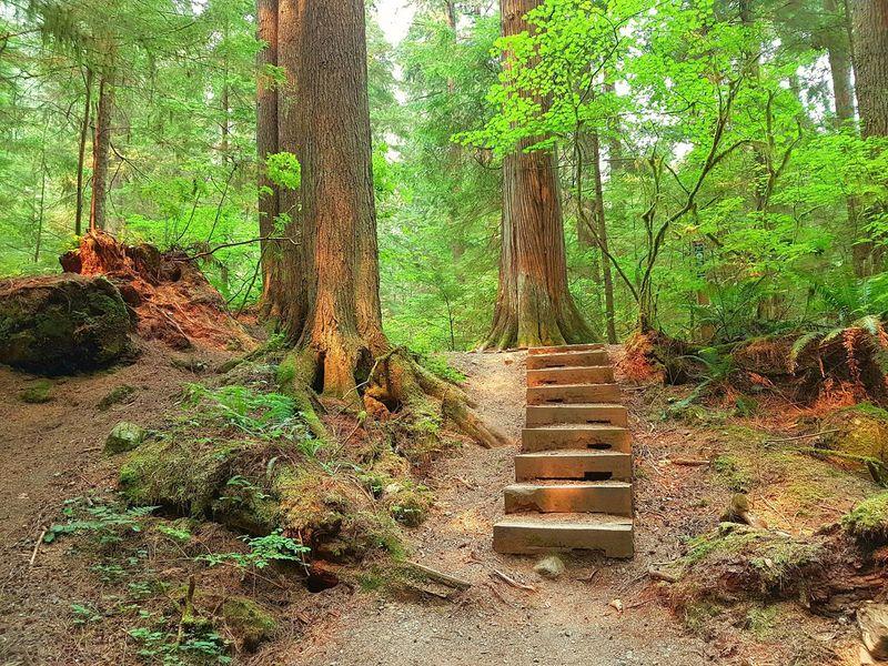 Stairs in the woods The Week On EyeEm EyeEmNewHere