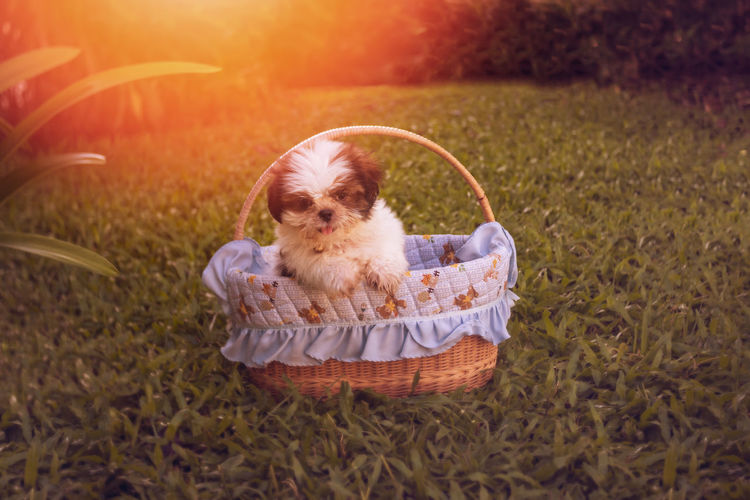 High angle portrait of a dog in basket