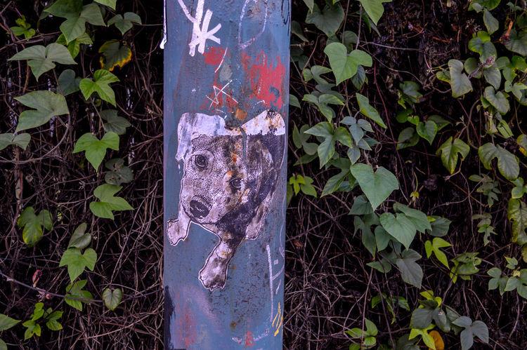 Art City Close-up Creativity Day Dirty Dog Graffiti Growing Human Representation Leaf Lost Dog Street Urban