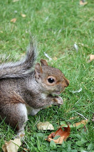 Squirrel Squirrels Squirrel Eating Esquilo Animals Animal Animal Photography Squirrel Closeup Ground Squirrel Squirrelfood