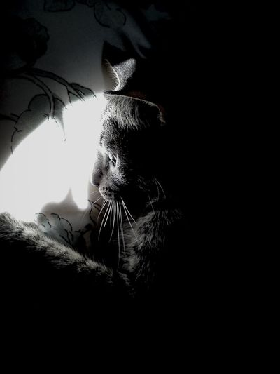 Cat Lovers Cute Pets Exploring Light And Shadow Experimental