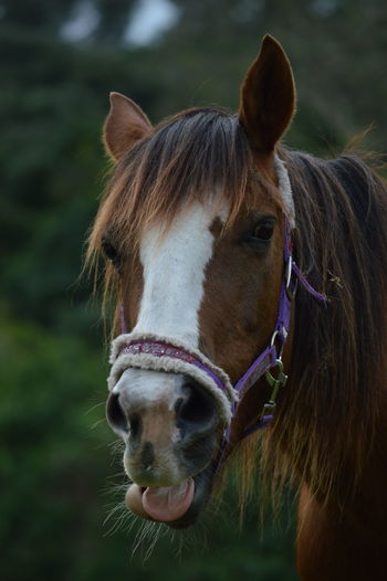 Horse Photography  Funny Faces Animal Themes Outdoors Taking Photos Horselife