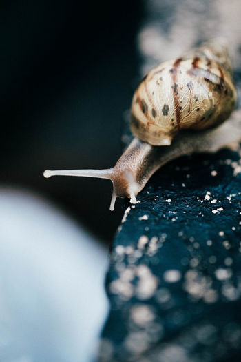 Detail of snail