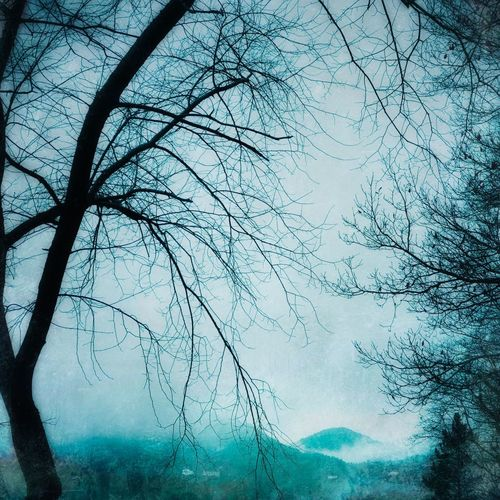 Winter Coming Misty Mountains  Branches Bare Tree Tree Branch Nature Beauty In Nature Outdoors No People Tranquility Cold Temperature
