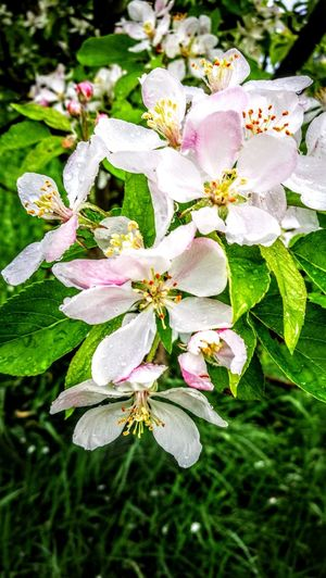 Trees after the rain... Flower Beauty In Nature Outdoors Freshness Springtime Plant Wendland Originalpicture Blooming Tree Multi Colored Green Color Beauty In Nature GetbetterwithAlex Original Picture