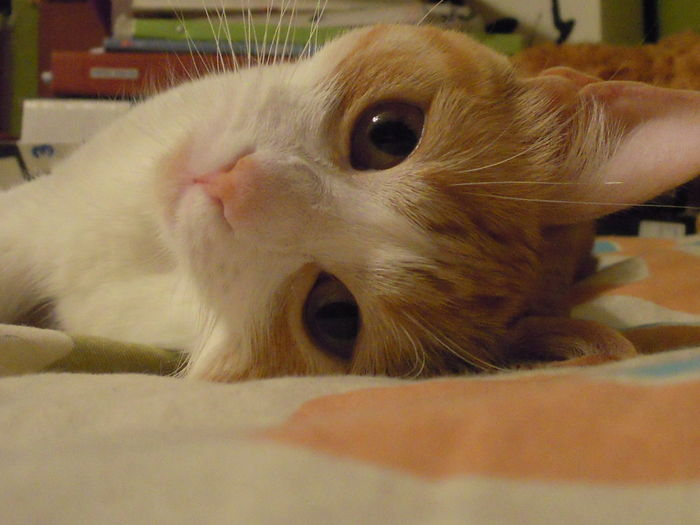 jugando com mi gatita Sisí