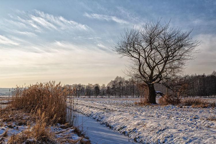 Winter Frozen Nature Landscape Deepfreeze