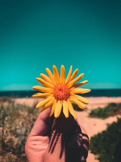 Close-up of hand holding yellow flower at beach