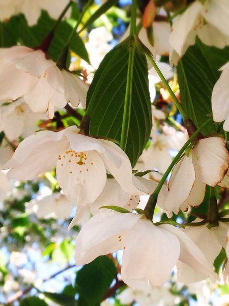 Flowers IPhone5 Photo
