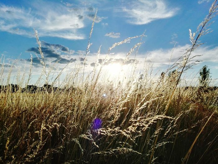 Summer Taking Photos Nature Photography Relaxing Grass And Sky