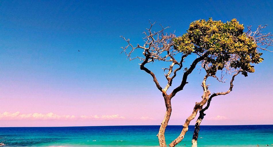 Kua bay tree