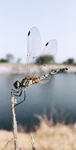 Confined Space Water Full Length Insect Close-up Animal Themes