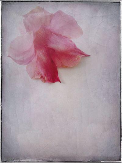 Blossom Still Life Floral Flowers Blossom