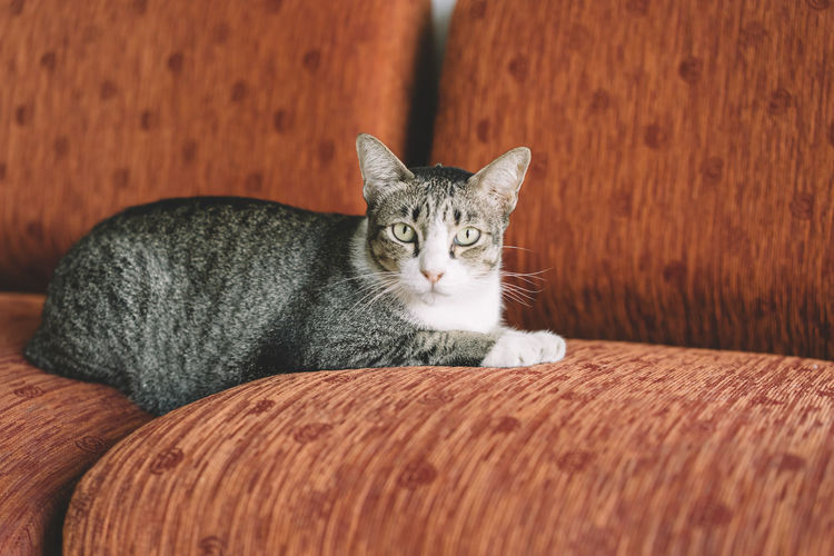Animal Themes Cat Close-up Day Domestic Animals Domestic Cat Feline Indoors  Looking At Camera Mammal No People One Animal Pets Portrait Whisker